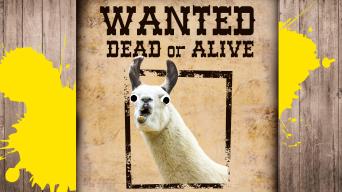 Wanted Poster Thumbnail