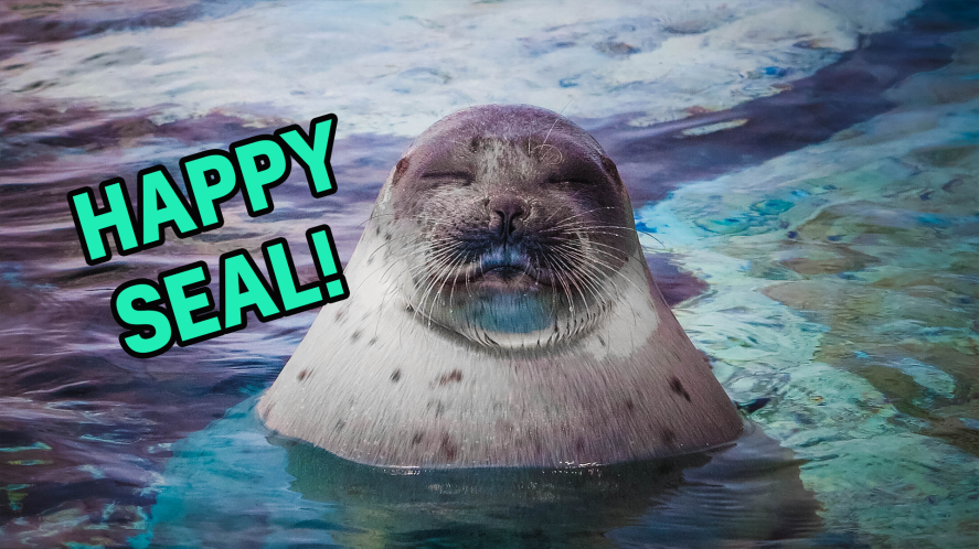 Happy animal result thumbnail