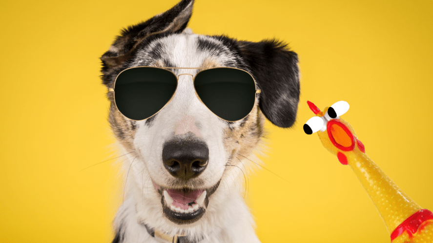 Dog on yellow background with stickers