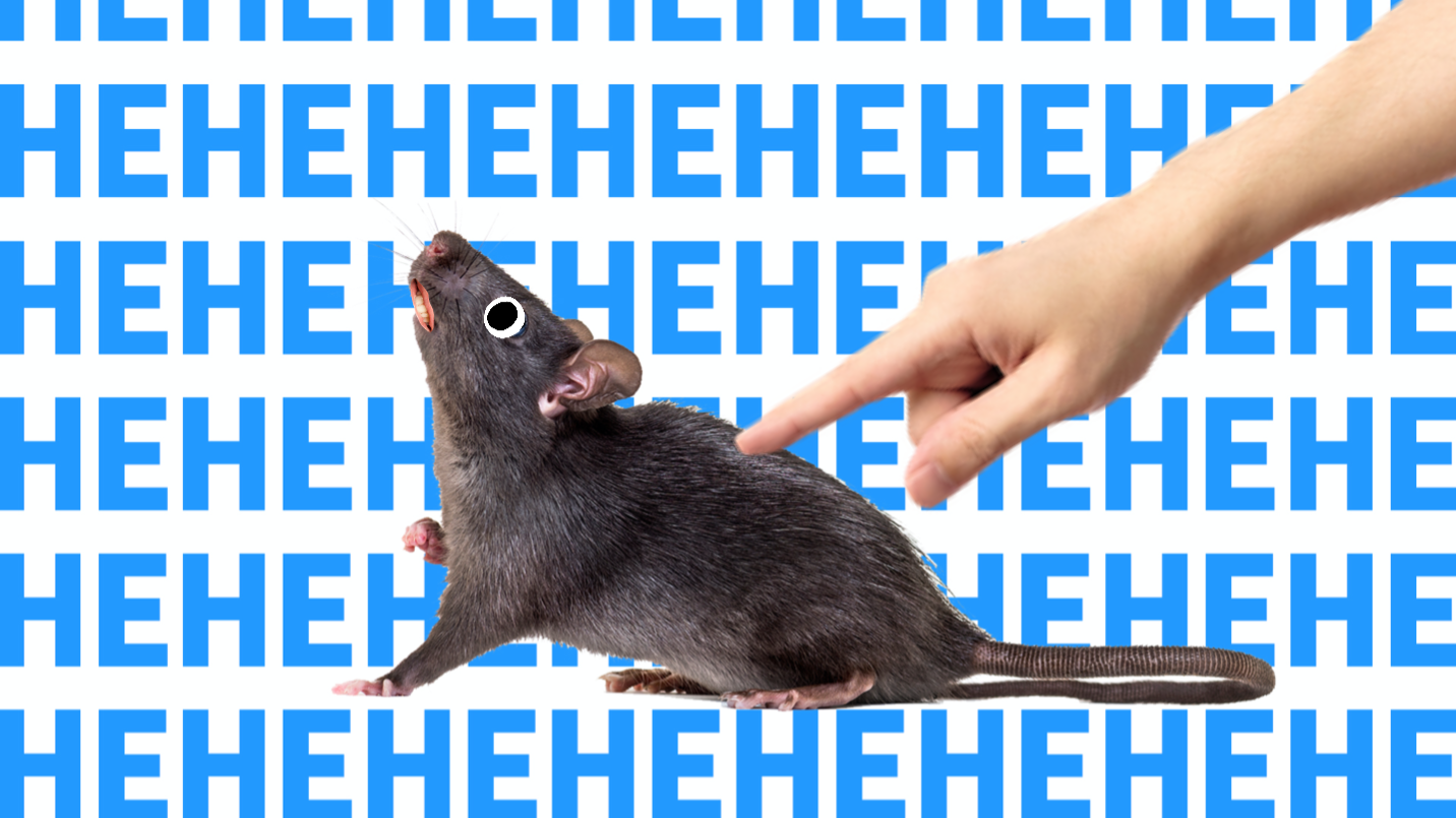 A rat being tickled