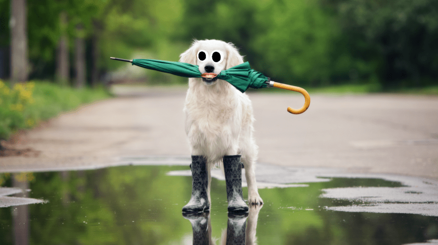 A dog in wellies