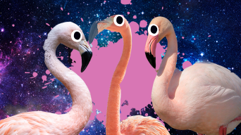 Flamingo Jokes Thumbnail