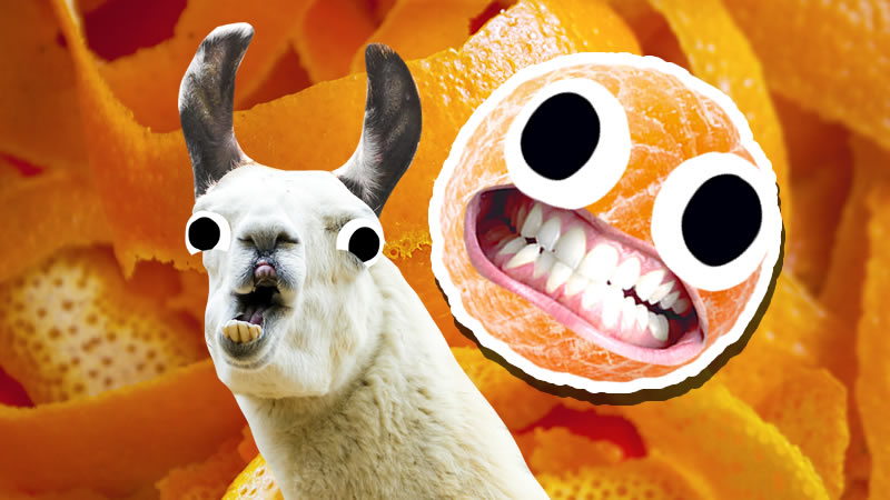 Grinning orange and a surprised looking goat