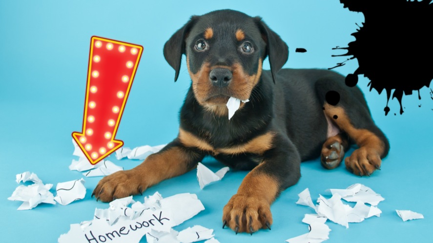 Dog with torn paper on blue background