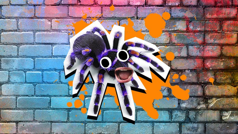 An open mouthed purple spider