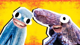 Octopus Jokes Thumbnail