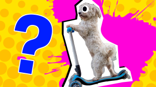 Scooter Quiz Thumbnail