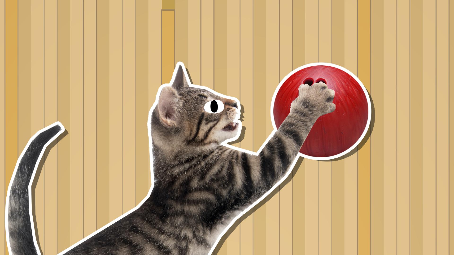 A cat bowling