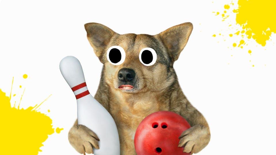 Bowling dog