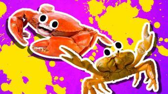 Crab Jokes