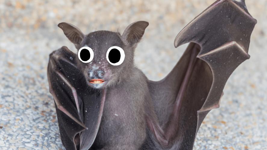 A bat, close up