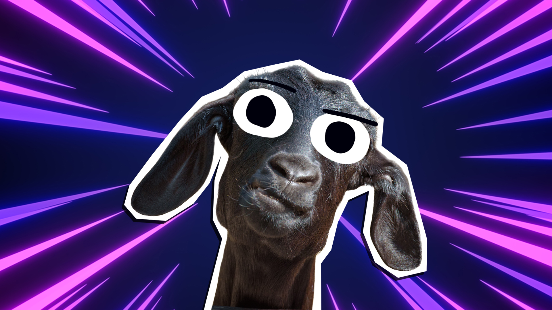 A quizzical looking goat in front of a purple background
