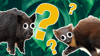 Wild Animal Quiz Thumbnail