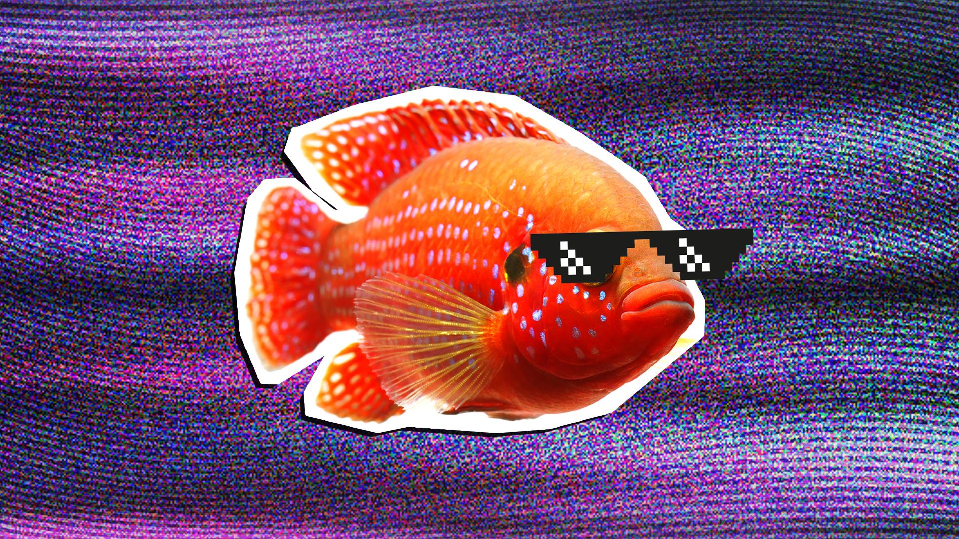A goldfish wearing sunglasses