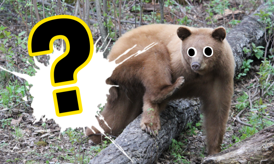 It's a picture of a real-life grizzly bear! Eek!