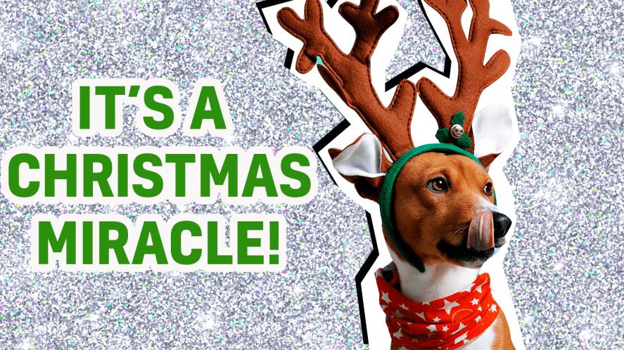 Christmas Miracle result thumbnail