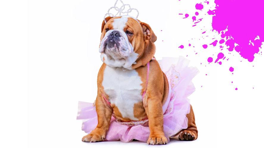 Dog in tiara and tutu