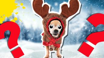 Dog in reindeer costume