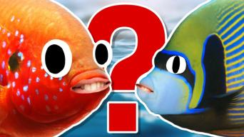 Fish quiz and answers