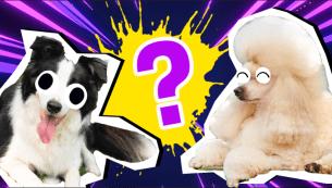 Dog Breed Quiz Thumbnail