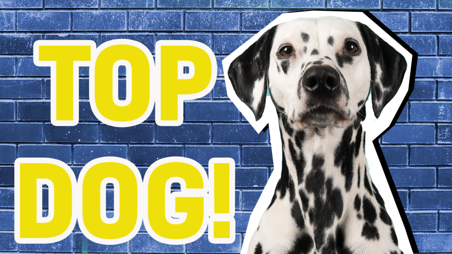 Top dog result thumbnail