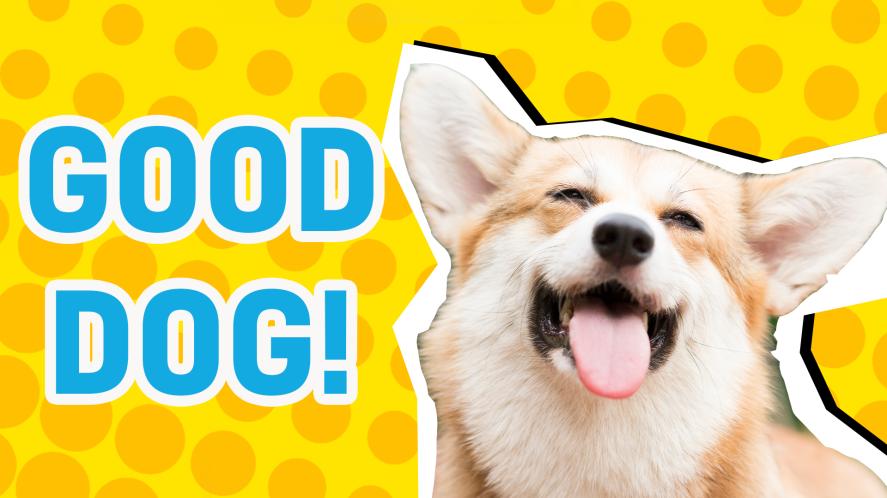 Good dog result thumbnail