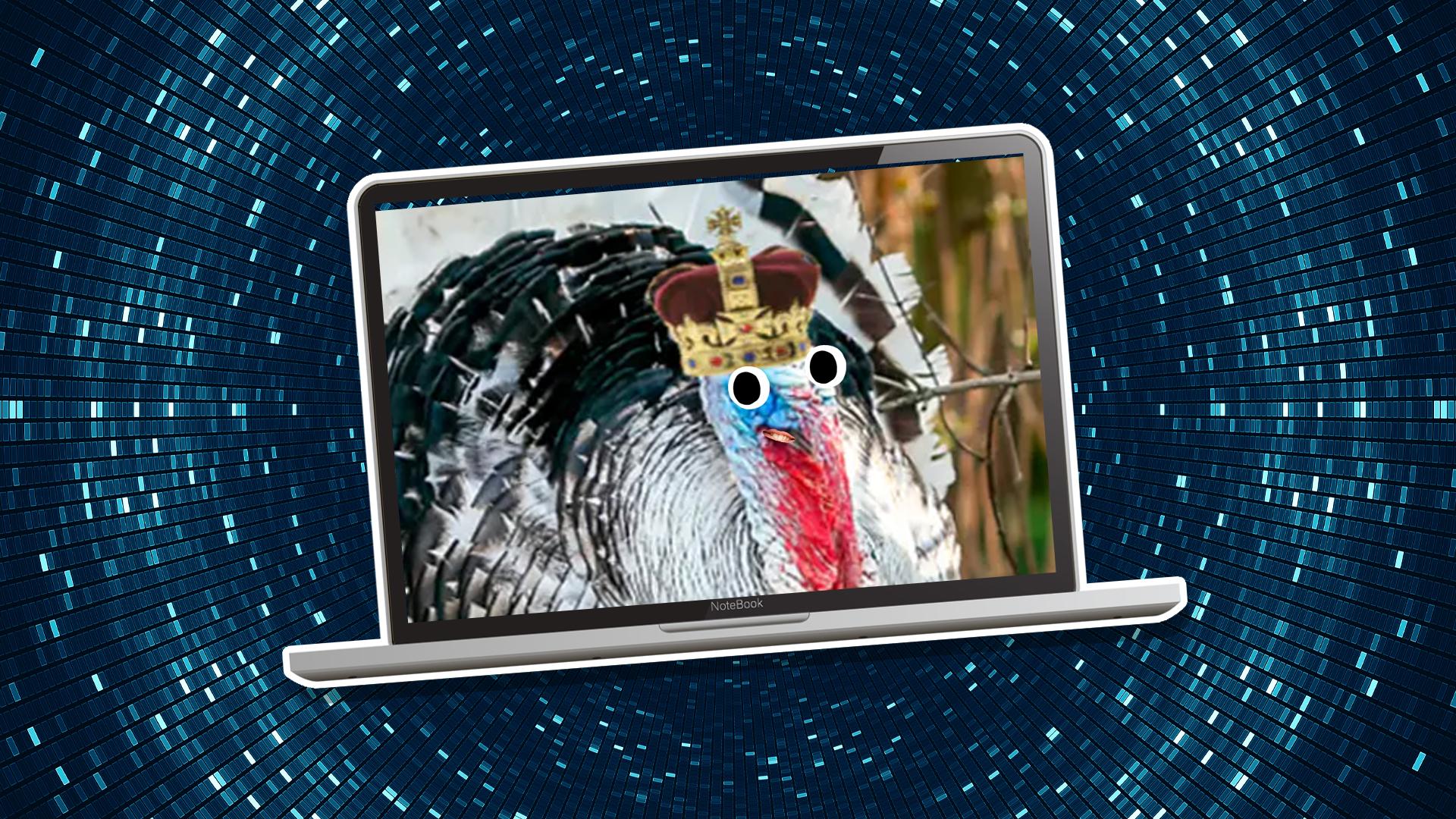 A turkey on the laptop
