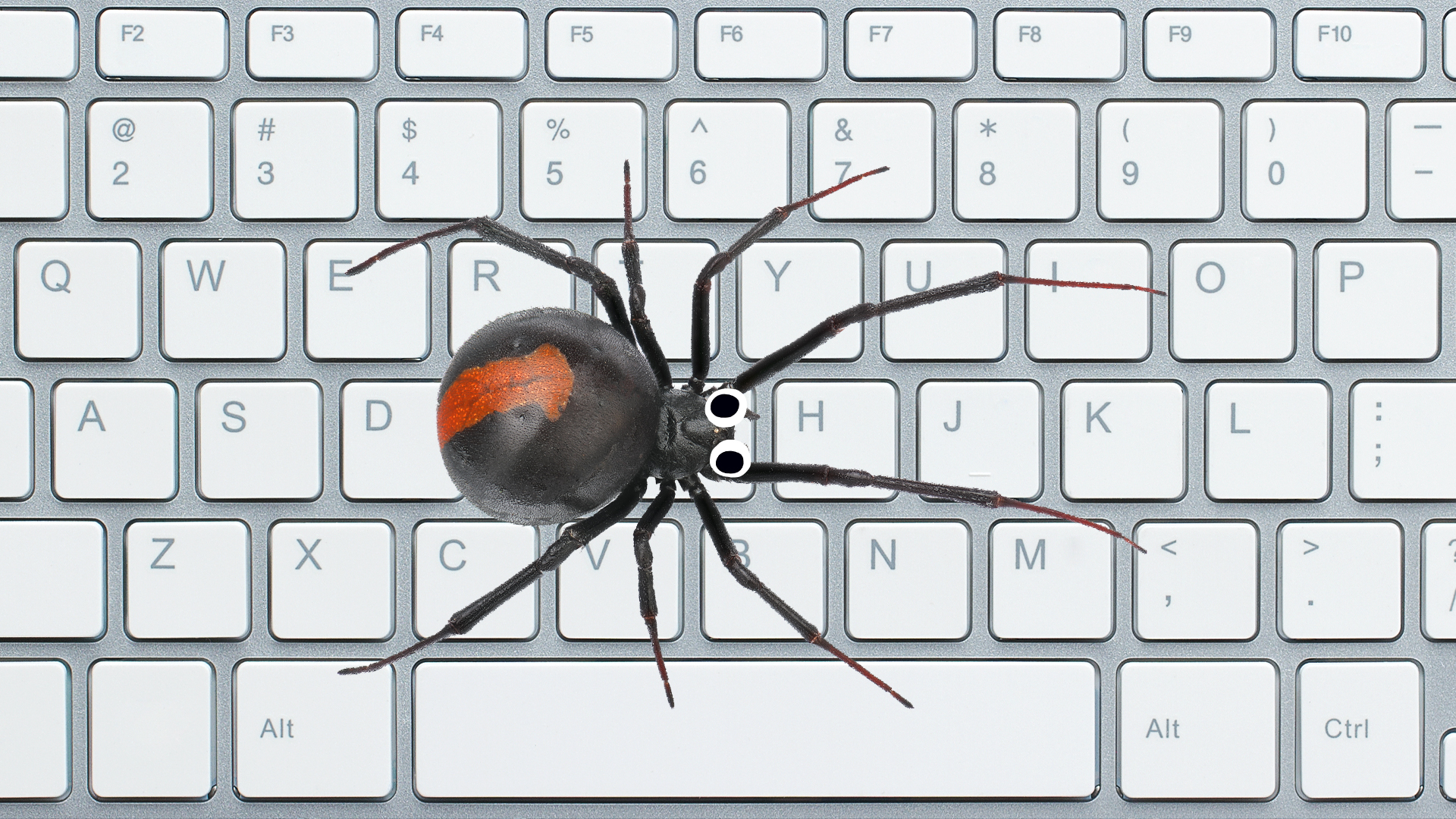A spider on a keyboard