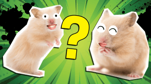 How Much Do You Know About Hamsters?
