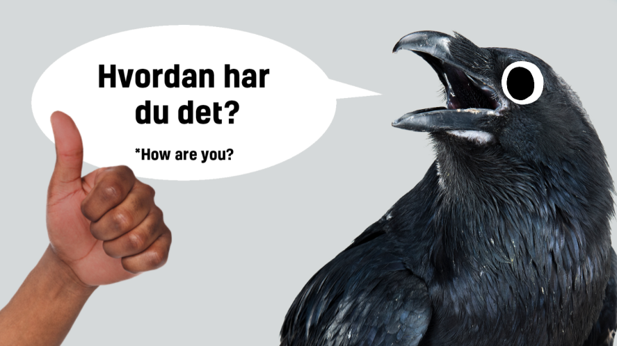 A raven