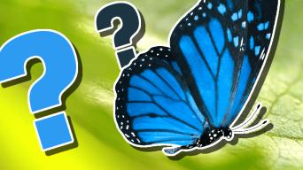 Insect Trivia Quiz