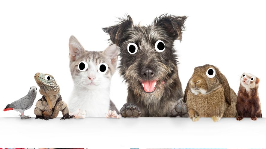 Budgie, lizard, cat, dog, rabbit and ferret