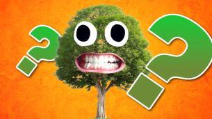 Treevia (Tree Trivia Quiz)