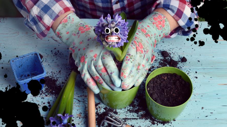 A plant pot