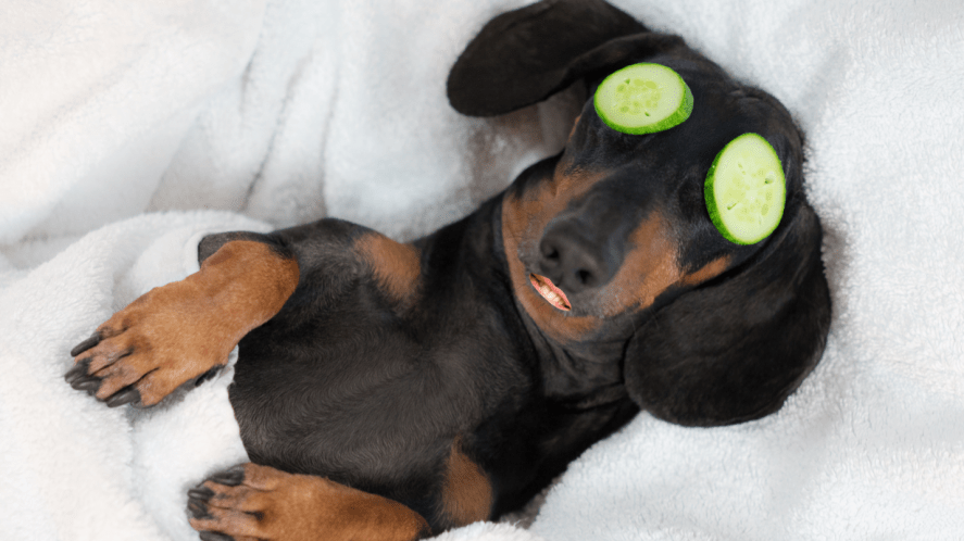 A relaxing dog