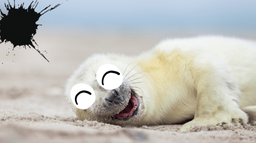 Baby seal pup smiling