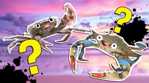 The Ultimate Crab Quiz!