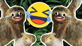 Sloth Jokes