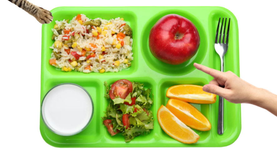 A meal tray