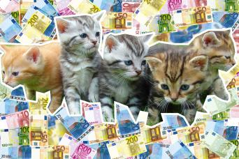 Cats with Cash!