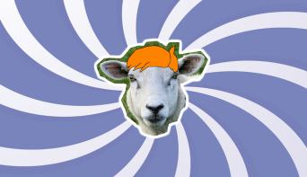 This is a picture of a sheep with a fancy hairstyle