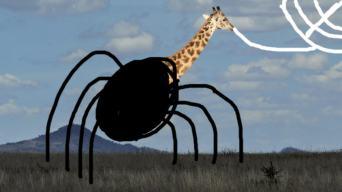 spider giraffe
